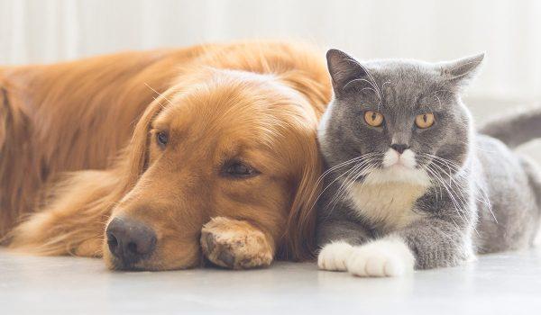 حیوانات خانگی و راه های مقابله با استرس، اضطراب و افسردگی