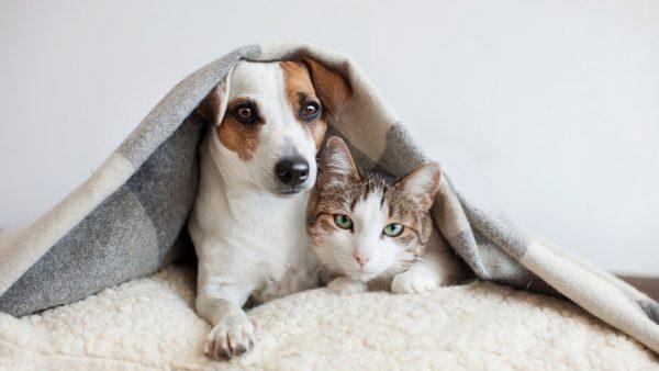 حیوانات خانگی -2