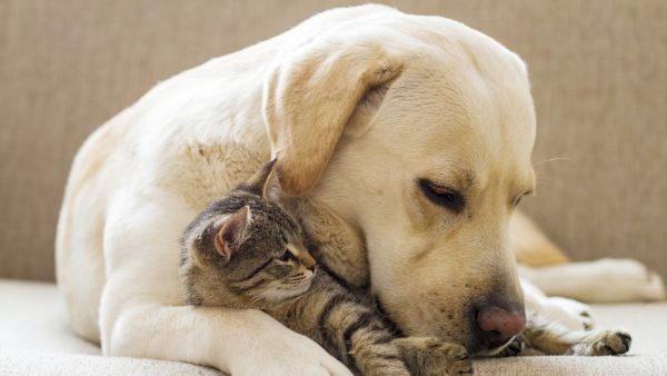 حیوانات خانگی -3