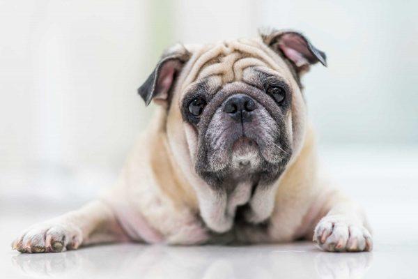 حیوانات خانگی؛ فواید و معایب نگهداری از حیوانات خانگی