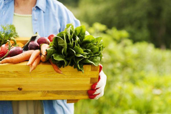 غذای ارگانیک -3