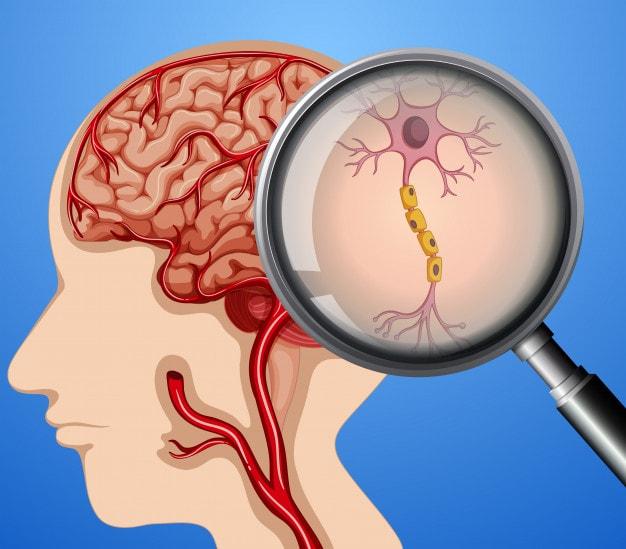 خوراکی های موثر در درمان بیماری های مغزی
