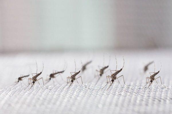 پشه؛ راه های دور كردن و ویروس های منتقل شده...