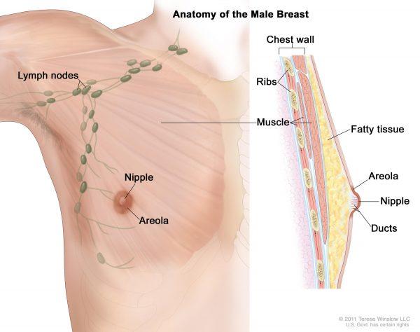 کوچک کردن نوک پستان