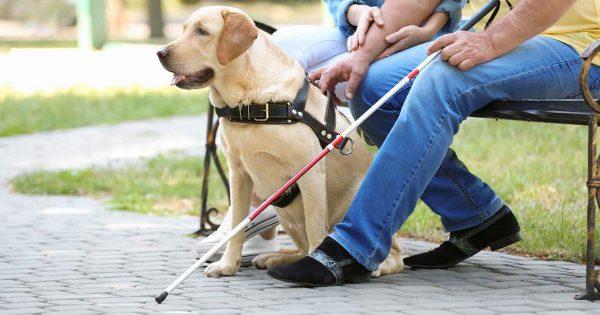 لوراتادین برای سگ ها