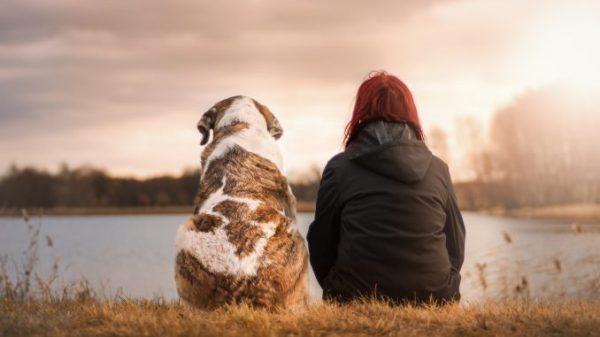 کنار آمدن با غم از دست دادن حیوان خانگی