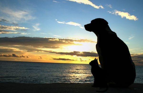 از دست دادن حیوان خانگی