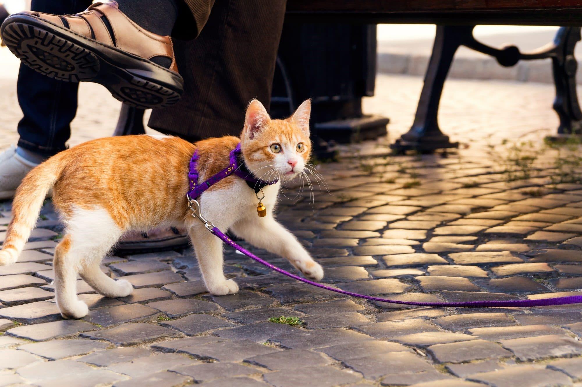 آیا واقعاً میتوان گربهها را تربیت کرد؟!