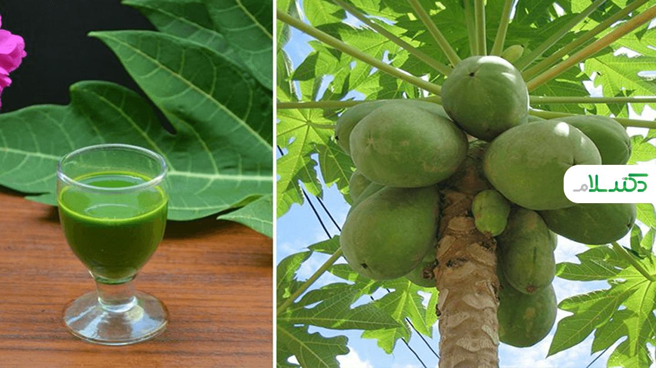 آب برگ پاپایا؛مفید برای سلامتی + طرز تهیه و روش صحیح مصرف
