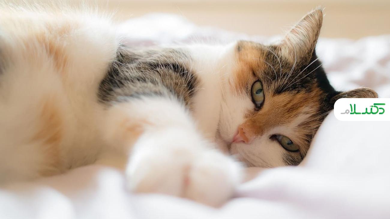 رایج ترین مشکلات بهداشتی در گربه ها