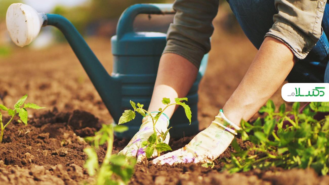 ترفندهای باغبانی و باغچه داری برای افراد تازه کار +ویدئو