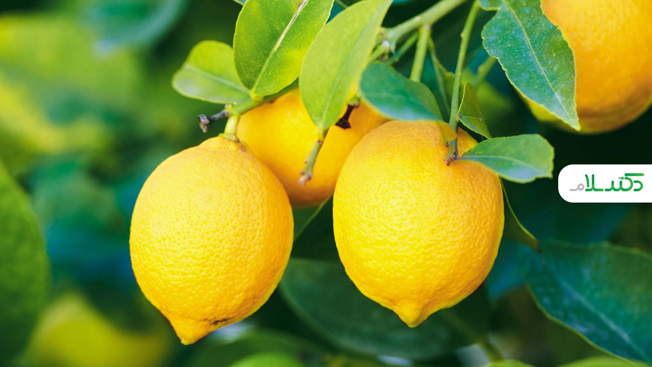 نقش شگفت انگیز لیمو در سلامتی